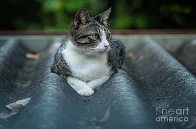 Photograph - Cat In The Cradle by Venura Herath