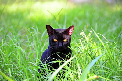 Photograph - Cat In The Grass by David Lee Thompson