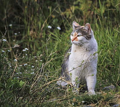 Photograph - Cat In The Grass by Elenarts - Elena Duvernay photo