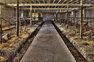 Photograph - Cat In The Milking Barn by Roger Passman