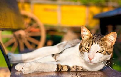 Gray Tabby Mixed Media - Cat In The Sun by Boyan Dimitrov