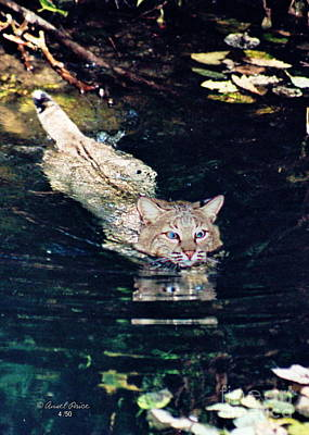 Photograph - Cat In The Water by Ansel Price