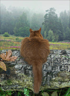 Art Print featuring the photograph Cat In The Wild by Vladimir Kholostykh
