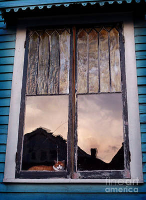 Photograph - Cat In The Window by Jeanne  Woods
