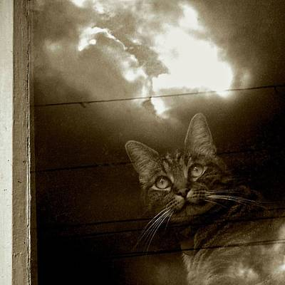 Photograph - Cat In The Window by Patricia Strand