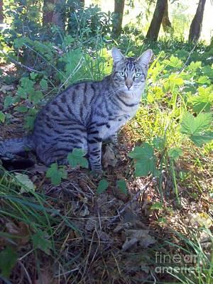 Mixed Media - Cat by Joyce Woodhouse