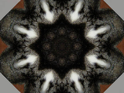 Photograph - Cat Kaleidescope 1 by Dorothy Berry-Lound