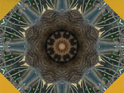 Photograph - Cat Kaleidescope 3 by Dorothy Berry-Lound