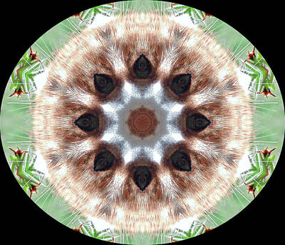 Digital Art - Cat Kaleidescope 8 by Dorothy Berry-Lound