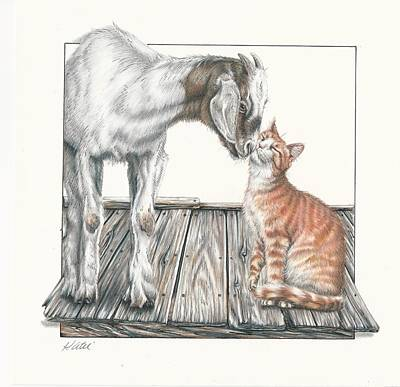 Drawing - Cat Kiss by Katie McConnachie