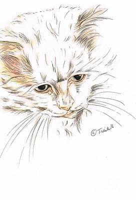 Drawing - Cat Interested by Teresa White