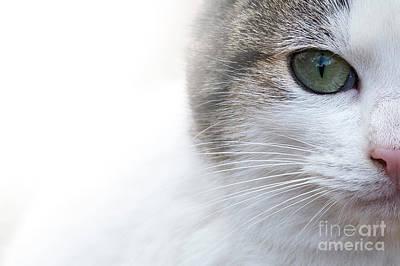 Photograph - Cat Look by Hernan Bua