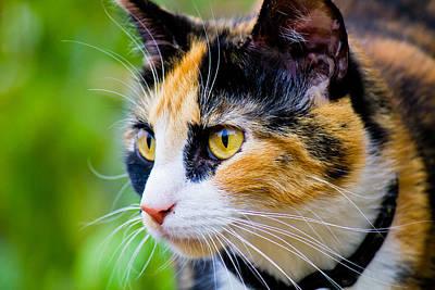 Photograph - Cat Looking Away by Jonny D