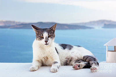 Homeless Pets Photograph - Cat Lying On Stone Wall In Oia Town, Santorini, Greece. Aegean Sea  by Michal Bednarek