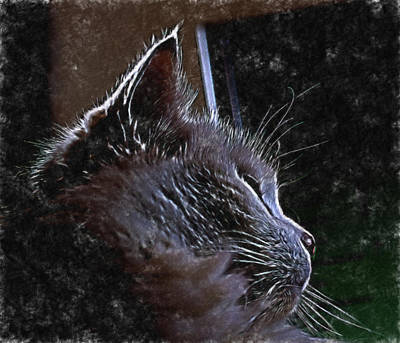 Cat Muse Art Print by Aliceann Carlton