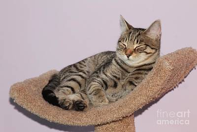 Photograph - Cat-nap by Debbie Stahre