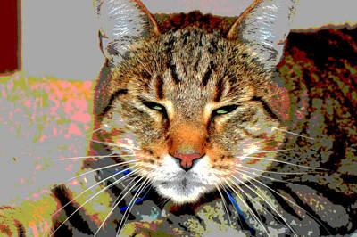 Cat Nap Love Art Print by Dianne Cowen