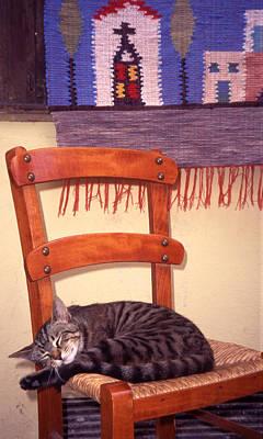 Cat Nap Art Print by Steve Outram
