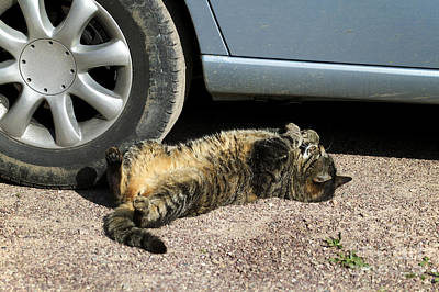 Pet Care Photograph - Cat Next To Car Wheel by Gerard Lacz