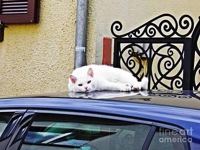 Photograph - Cat On A Car Roof by Sarah Loft