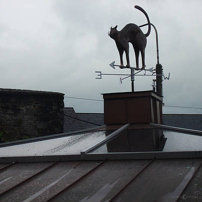 Cat On A Cool Tin Roof Art Print