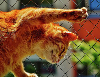 Photograph - Cat On A Fence by Alexas Fotos
