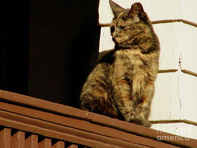 Photograph - Cat On A Porch by Mark Gilman