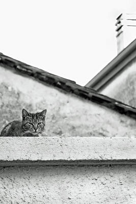 Minimal Art Photograph - Cat On A Roof, Varenna by Brooke T Ryan