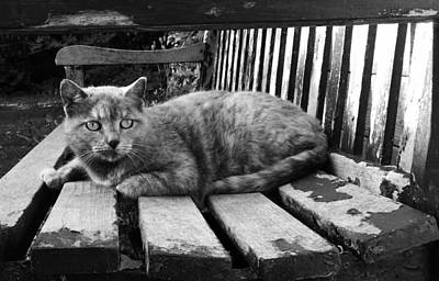 Photograph - Cat On A Seat by RKAB Works