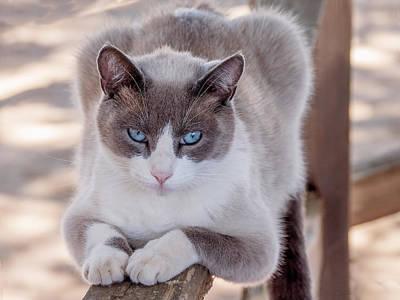Photograph - Cat On A Wooden Fence by Derek Dean