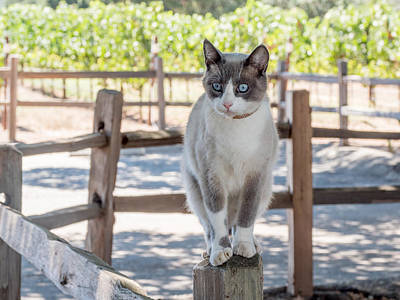 Photograph - Cat On A Wooden Fence Post by Derek Dean