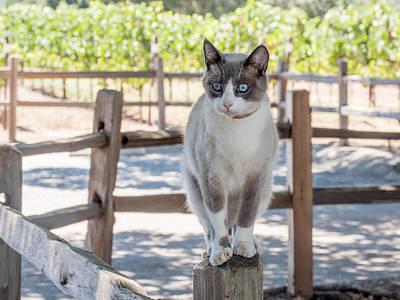 Photograph - Cat On A Wooden Fence Post by Derek Dean