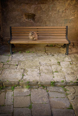 Photograph - Cat On Bench by Al Hurley