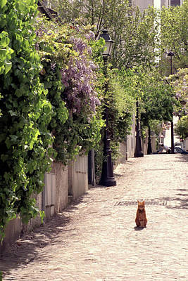 Cat On Cobblestone Art Print