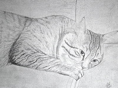 Wall Art - Drawing - Cat On Couch by Cybele Chaves