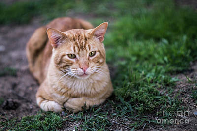 Photograph - Cat On Genoves Park Cadiz Spain by Pablo Avanzini