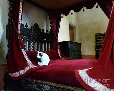 Photograph - Cat On Leonardo Da Vincis Bed by Barbie Corbett-Newmin