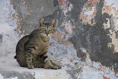 Gray Tabby Photograph - Cat On Stairs, Greece by Jean-Louis Klein & Marie-Luce Hubert