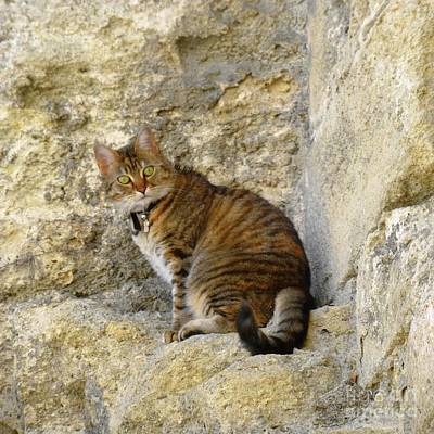 Photograph - Cat On Stone Wall by Barbie Corbett-Newmin