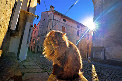 Photograph - Cat On Sun Rays On Street Of Groznjan Village by Brch Photography