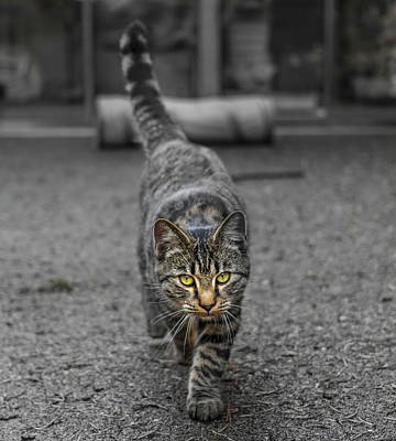 Cat On The Prowl Art Print by Rick Deacon