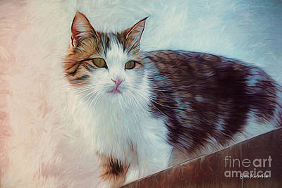 Digital Art - Cat On The Roof by Jutta Maria Pusl