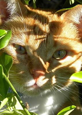 Photograph - Cat by Peggy McDonald
