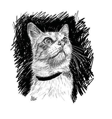 Digital Art - Cat @perli.cat by ZileArt