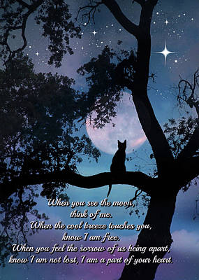 Of Cats Photograph - Cat Poem And Memorial by Stephanie Laird
