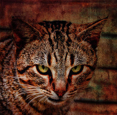 Photograph - Cat Portrait Fierce by Lesa Fine