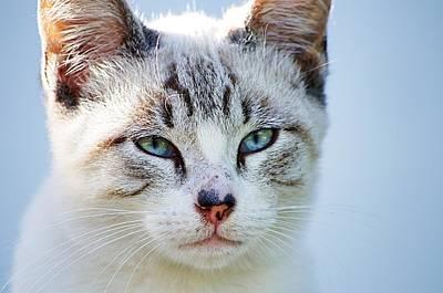 Photograph - Cat Portrait I by Paulo Goncalves