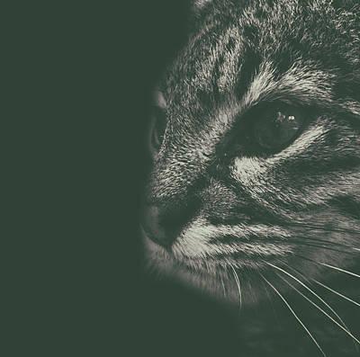 Adorable Photograph - Cat Portrait by Martin Newman