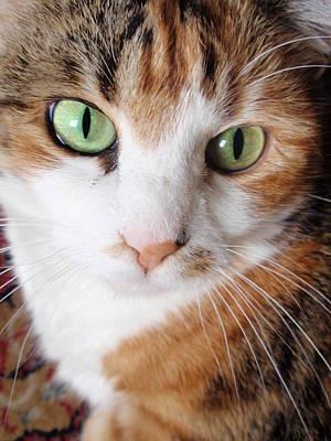 Cat Portrait Art Print by Valia Bradshaw