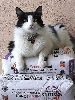 Photograph - Cat Ready To Work by Karen Zuk Rosenblatt